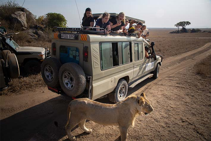 Students on Jeep Safari with Lion