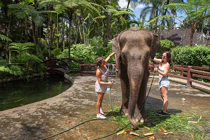 Students washing an Elephant